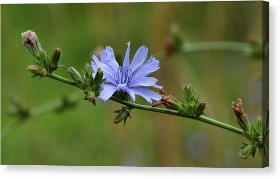 Botany Blues Canvas Print by JAMART Photography