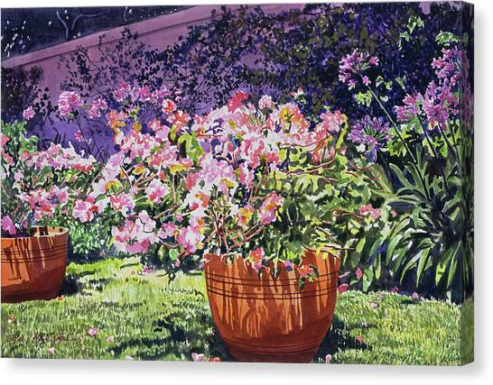Beverly Hills Canvas Print -  Bougainvillea Flower Pots Beverly Hills by David Lloyd Glover