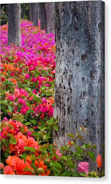 Bougainvillea Forever Canvas Print by Eggers Photography
