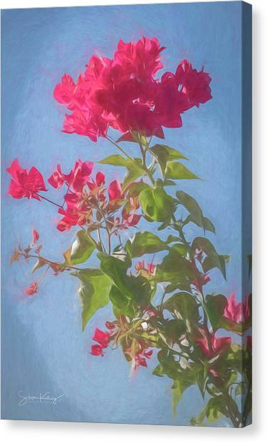 Bougainvillea Morning Canvas Print