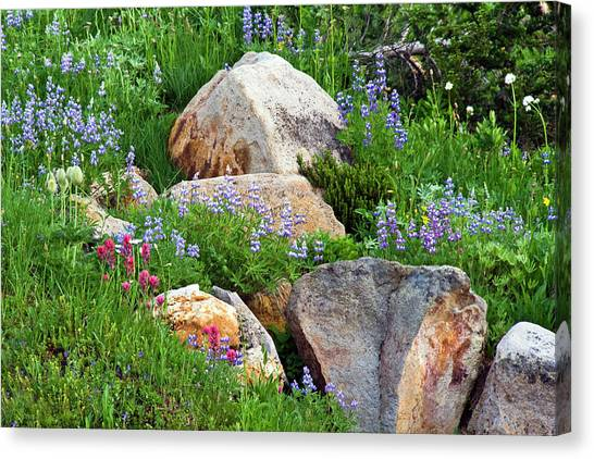 Boulder Blooms Canvas Print