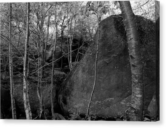 Boulders And Yellow Birch Canvas Print
