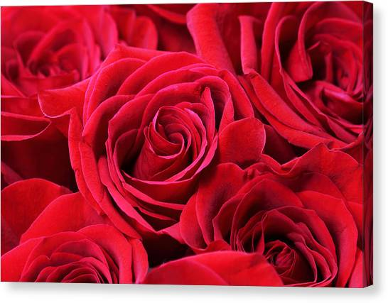 Bouquet Of Red Roses Canvas Print