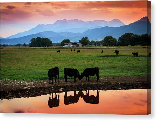 Bovine Sunset Canvas Print by Johnny Adolphson