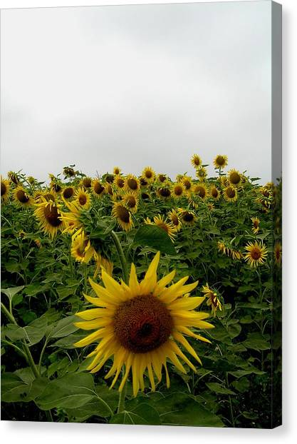 Bowing To The Crowd Canvas Print by Jeanette Oberholtzer