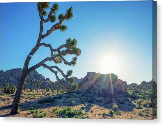 Desert Sunrises Canvas Print - Bowing To The Sun by Joseph S Giacalone