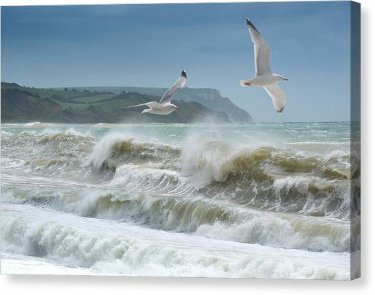 Bowleaze Cove Canvas Print
