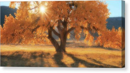 Boxelder's Autumn Tree Canvas Print