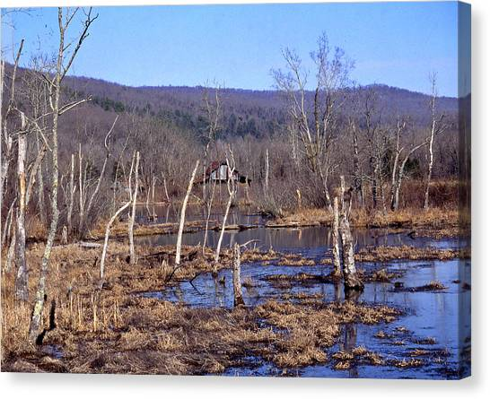 Boxely Swamp2 Canvas Print by Curtis J Neeley Jr