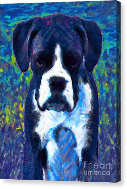 English Bull Dog Canvas Print - Boxer 20130126v5 by Wingsdomain Art and Photography