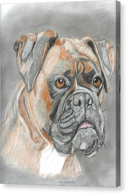 Boxer Canvas Print by Don  Gallacher