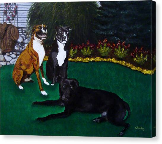 Boxer Pitbull Mix Canvas Print by Amanda Schambon