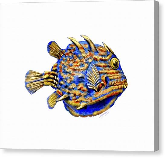 Boxfish II Canvas Print