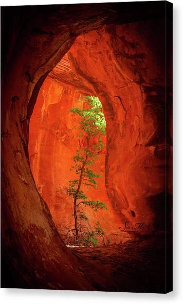 Boynton Canyon 04-343 Canvas Print