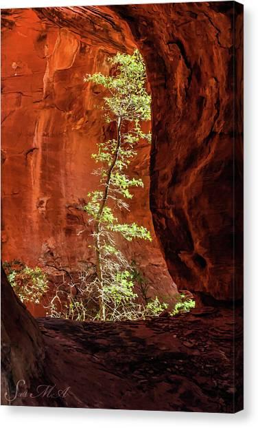 Boynton Canyon 07-034 Canvas Print