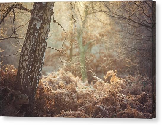 Sherwood Forest Canvas Print - Bracken by Chris Dale