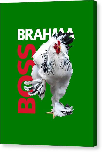 Brahma Boss T-shirt Print Canvas Print