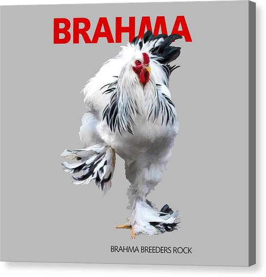 Brahma Breeders Rock Red Canvas Print