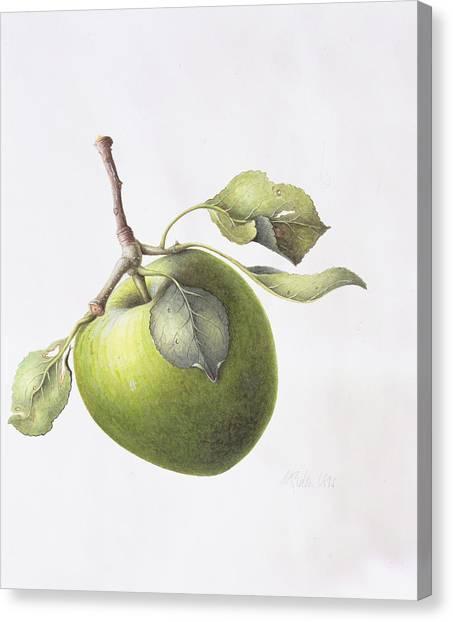 Cider Canvas Print - Bramley Apple by Margaret Ann Eden