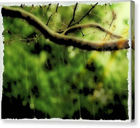 Branch In The Rain Canvas Print by Ken Gimmi