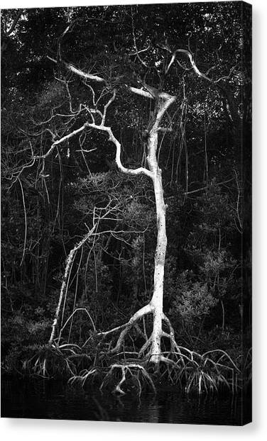 Inland Canvas Print - Branched by Marvin Spates