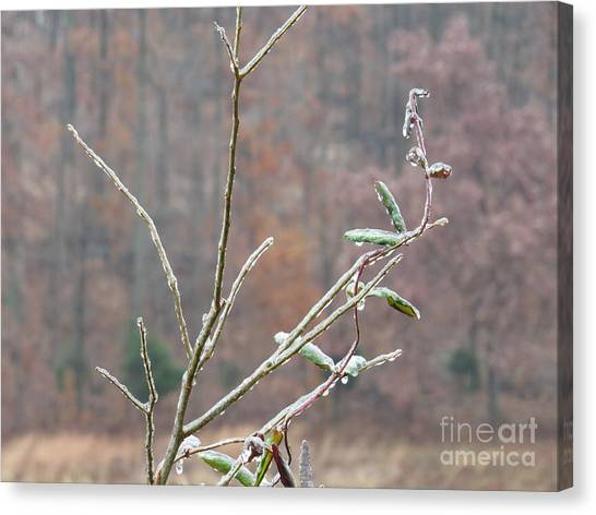 Branches In Ice Canvas Print