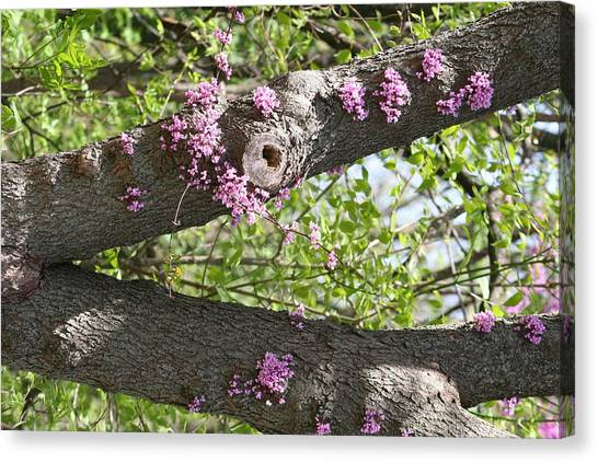 Branches Of Color Canvas Print by Eric Irion