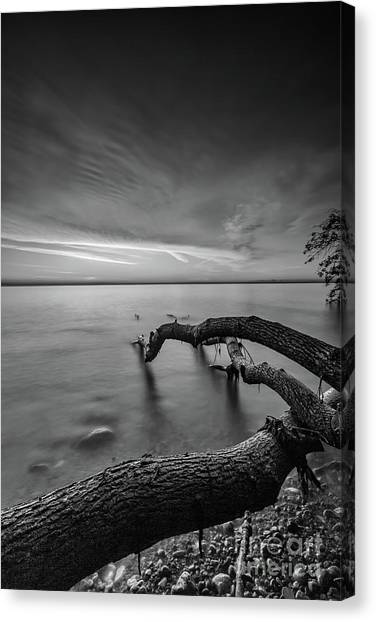 Branching Out - Bw Canvas Print