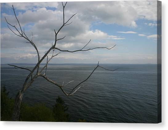 Branching Out Canvas Print by Dennis Curry
