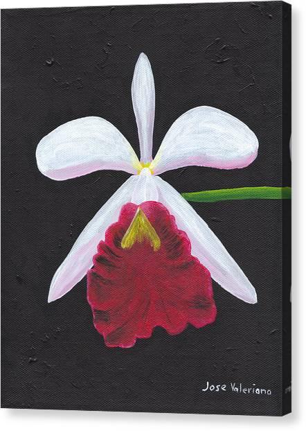 Brassalove Nodosa-rosita Canvas Print