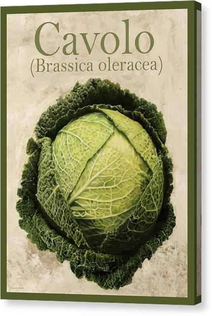 Cabbage Canvas Print - Brassica Oleracea by Guido Borelli