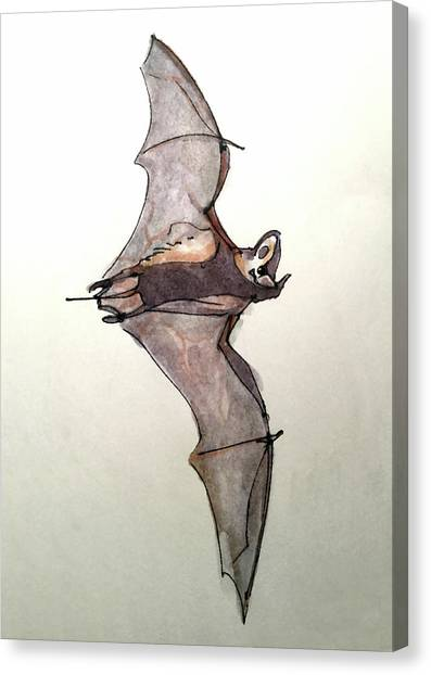 Brazilian Free-tailed Bat Canvas Print