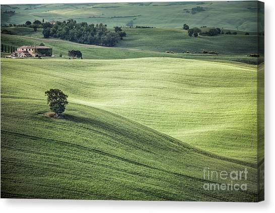 Rolling Hills Canvas Print - Breath Of A New Day by Evelina Kremsdorf