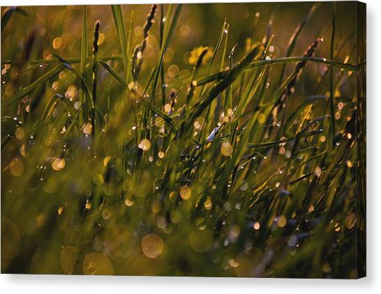 Breath Of Rain Canvas Print