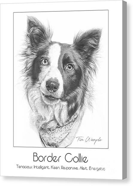 Breed Poster Border Collie Canvas Print by Tim Wemple