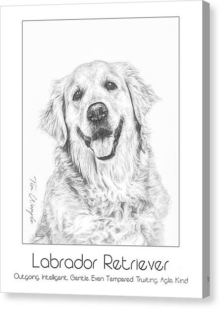 Breed Poster Labrador Retriever Canvas Print by Tim Wemple