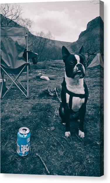 Brewdog Bull Canvas Print