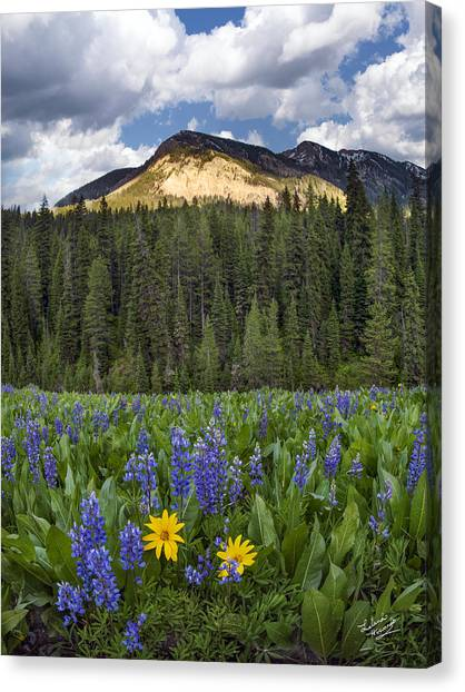 Teton National Forest Canvas Print - Bridger Teton National Forest by Leland D Howard