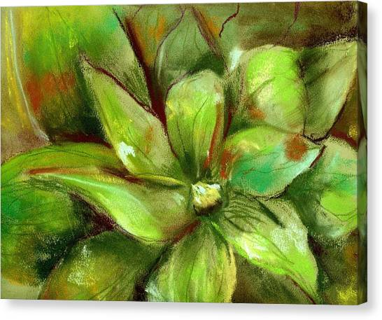 Bright Agave Canvas Print by Marilyn Barton