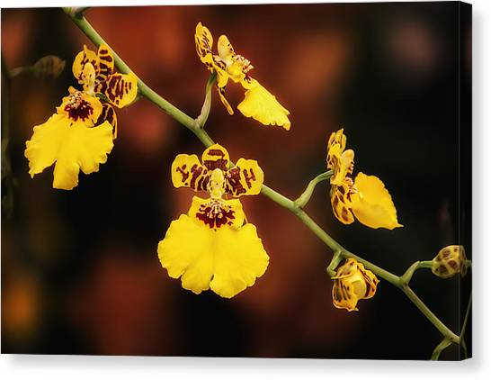 Elegant Canvas Print - Bright And Beautiful Orchids by Tom Mc Nemar