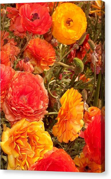 Bright And Sunny Canvas Print by Jean Booth