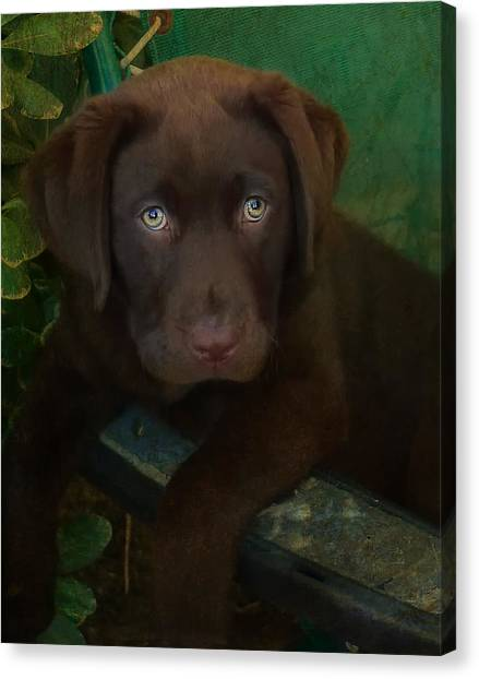 Puppies Canvas Print - Bright Eyes by Larry Marshall