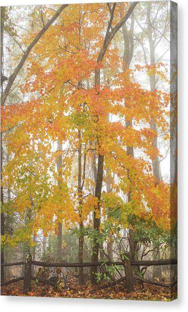Bright Fall Canvas Print by Sallie Woodring