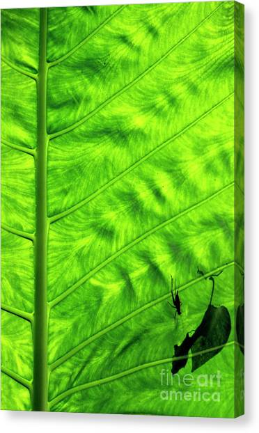 Bright Green Leave With An Insect Crawling Over Its Surface Canvas Print by Sami Sarkis