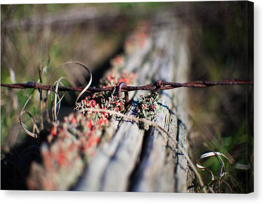 Bright Lichen Canvas Print