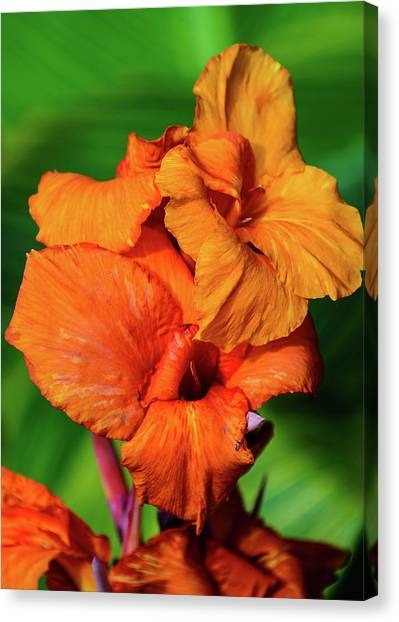 Bright Orange  Canvas Print
