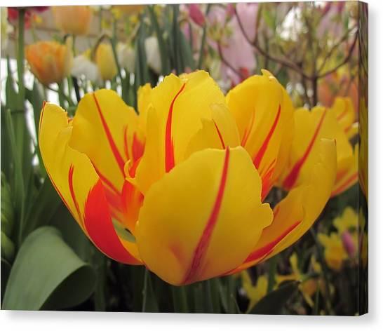 Bright Tulip Canvas Print