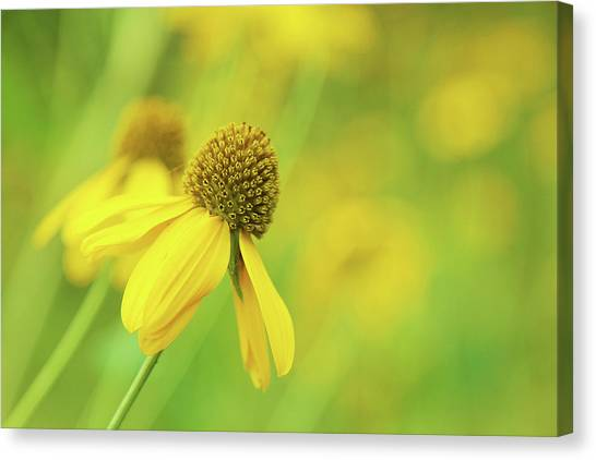 Bright Yellow Flower Canvas Print