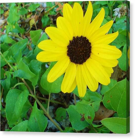 Bright Yellow Joy Canvas Print
