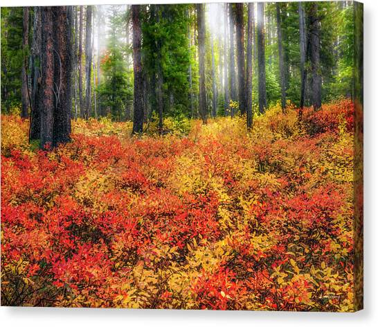 Boise National Forest Canvas Print - Brilliant Forest Serenity by Leland D Howard